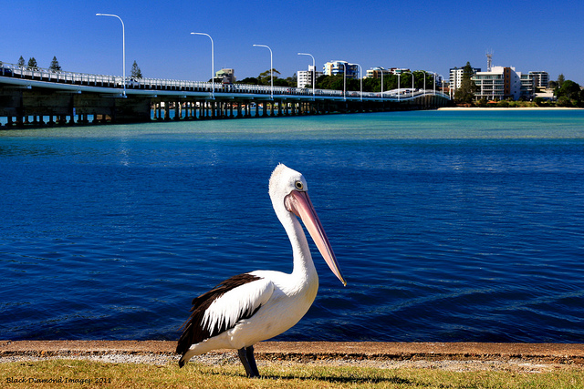 Forster Australia  city photo : Kids Stay Free at Forster Holiday Village Travel 4 Kids Family ...